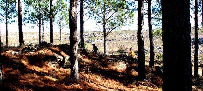 Desarrollo de herramientas cuantitativas para la evaluación de riesgo y toma de decisiones sobre el potencial de infestación de plagas forestales en la provincia de Córdoba
